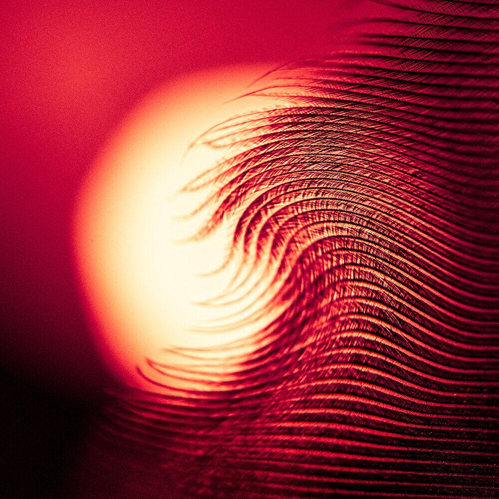 The Soft Wave by Melisa Savickas