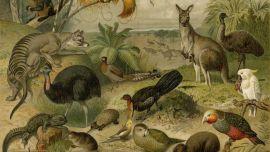 EXHIBITION Ballarat, Animalia-Australis-1024x801