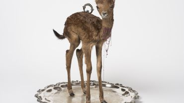 Julia deVille, Sentience 2012, stillborn deer, rubies 18.45 ct, pear-cut garnet 0.7 ct, 18 ct, white gold, sterling silver, bronze, black rhodium and antique platter. Collection Bendigo Art Gallery. Photo: Terence Bogue. Image reproduced courtesy of the artist.