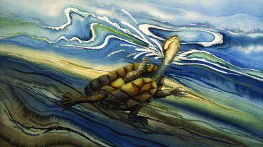 GIPPSLAND Annemieke Mein_The Eastern Snake Necked Tortoise 1996