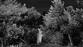 Trent Parke, Rabbit, 2010, Archival Pigment Print, 120 x 175 cm (unframed). Image courtesy of the artist and Stills Gallery, Sydney. Latrobe Regional Gallery Collection, purchased from Stills Gallery, 2016.