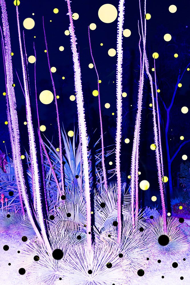 YUNHUA ZHANG 