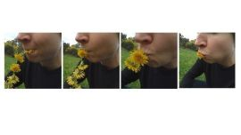 Roseanne Bartley (Assisted by Anna Varendorff) Eating Daisy 2017 Taraxacum officiale, Asteraceae or Dandelion Courtesy of the artist