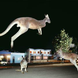 WHITEHORSE - GOLLINGS - Kay Street