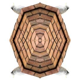 GLEN EIRA Kent Morris, Boonwurung (St Kilda) - Sulphur-crested Cockatoo